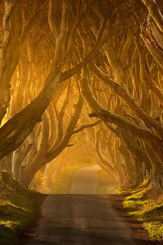 a golden road...