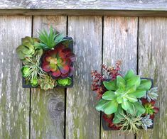 Faux Succulent Arrangements, Succulent Stems, Air Plant by TheQueenBeesGarden Faux Succulents, Succulent Arrangements, Air Plants, Etsy Seller, Floral Wreath, Wreaths, Unique Jewelry, Handmade Gifts, Vintage