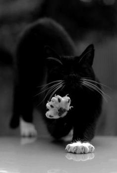 Kexxbloxx Schwarze Katze, weiße Söckchen und weißer Schnurrbart...
