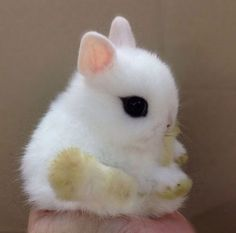 Angora rabbit, with cloud-like fur and a cotton-ball tail, was originated in Ankara and Turkey along with Angora cat and Angora goat is one of the oldest types of domestic animal. Description from pinterest.com. I searched for this on bing.com/images