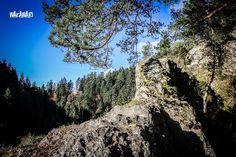 Black Forest, Posts, Facebook, Outdoor, Childhood Memories, Travel Report, Adventure, Woodland Forest, Viajes