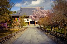 Spring colors in Kyoto