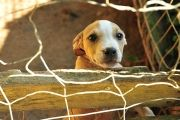 Neglected and abused pets need our help everyday.