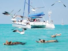 The swimming Pigs of Big Major Cay, Bahamas.... Been there it's something to be seen, big pigs swimming out to the boats!