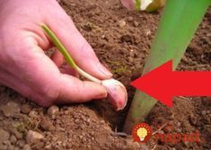 Planting Seeds, Carrots, Garlic, Flora, Remedies, Gardening, Vegetables, Plants, Pergola