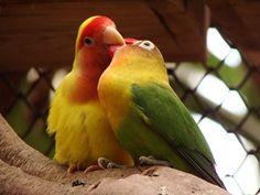 65 Ideas De Artículos Sobre Aves Aves Criadero Especies De Peces