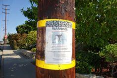 Santa Monica, California: Coyotes in My Neighborhood!