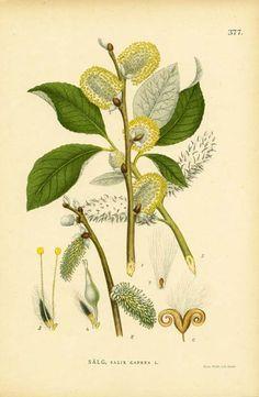 antique botanical illustrations, framed artwork