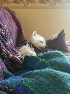 Rudy Tooty sleeping