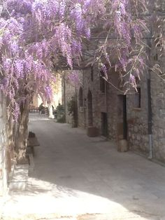 Springtime in Vessa Chios island Great Photos, Cool Pictures, Chios Greece, Greek Flowers, Forest Mountain, Tree Forest, Flowering Trees, Spring Time, Island