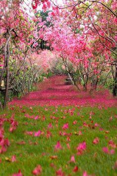 Romantic Flower Grass Photo Background Studio Photography Backdrop Props