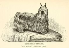 Bradford Hero - 1890 -  House and pet dogs, their selection, care and training; with portraits of prize winning specimens of all principal breeds.