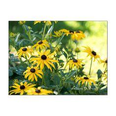 Gelbe Blumenbilder machen glücklich und vertreiben sogar den Corona-Blues, sagen Psychologen. Ein Münchner Senioren- und Pflegeheim macht jetzt den Praxistest mit 12 gelben Blumenbildern. Plants, Flower Pictures, Photo Wallpaper, Wallpapers, Art Print, Yellow, Nice Asses, Plant, Planets