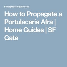 How to Propagate a Portulacaria Afra | Home Guides | SF Gate