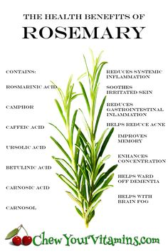 Rosemary, an aromatic evergreen, perennial shrub that has been around for centuries and was highly valued in Egypt, Greece and Rome. Healing Herbs, Medicinal Herbs, Natural Healing, Rosemary Health Benefits, Mint Benefits Health, Health Facts, Health And Nutrition, Health Diet, Natural Medicine