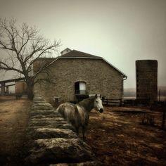 spring hill farm - wayne greer