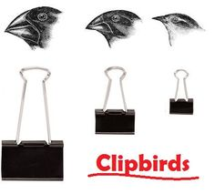 Clipbirds activity from Berkeley bolsters student understanding of natural selection. Students use different size binder clips to represent the different size beaks of Darwin's finches.