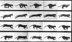 cat run cycle by Eadweard Muybridge Cat Reference, Animation Reference, Animation Film, Animation Mentor, Animation Storyboard, Animation Character, Anatomy Reference, Drawing Reference, Cat Run