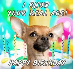 Funny Birthday Wishes for Friend - Humorous Birthday Wishes | Happy Birthday Greeting Cards