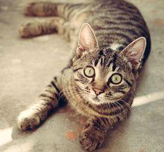 猫 / ネコ ID:201502050800