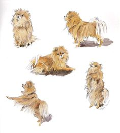 Lexi. #sketchbook #drawing #pomeranians #dogs