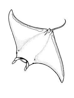 Manta Ray Colouring Pages. Moving like a graceful bird in the sea, manta rays are one of the diver's idols fish. This animal full of charisma turns out to have uniqueness and su. Animal Coloring Pages, Coloring Pages To Print, Colouring Pages, Printable Coloring Pages, Manta Ray Tattoos, Stingray Tattoo, Petit Tattoo, Fish Wallpaper, Wallpaper Wallpapers