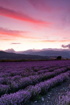 just because the colors make me think of The Desire Map. ternpest: Lavender at Sunset | Evgeni Dinev | Bulgaria