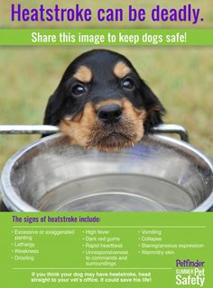 Infographic: Preventing Heatstroke in Dogs - Petfinder.  Summer Safety - very important!  Take good care of them no matter what time of year.