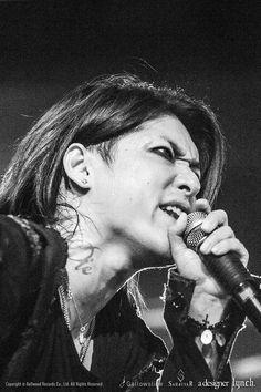 Hazuki(Lynch.)