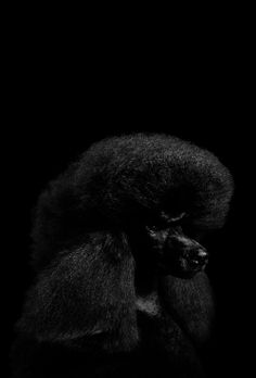 Shades Of Black, Black And Grey, Color Black, Colour, Animals Images, Animals And Pets, Wildlife Photography, Animal Photography, Dog Rules