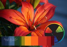 Color Inspiration - Hot Orange Lily, color wheel, color palette