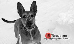 19 Reasons Why My Dog Is My Best Friend #dogs #mansbestfriend #lovemydog