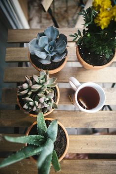 """chelsieautumn: """"Tea with the plants this morning """""""