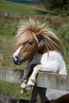 Funny pony!!