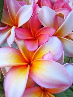 Aloha, oasis!