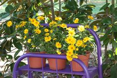 This is a planter made from a vintage twin metal bedstead.  Geaux Tigers!!