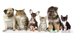 Pet sitting is one of the passions of this company. They have dog and cat sitters who look after your pets, providing dog day care services when needed.