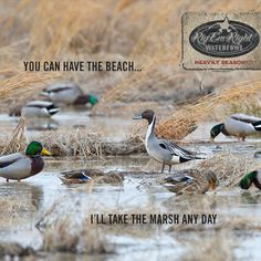 Which do you prefer? #waterfowl
