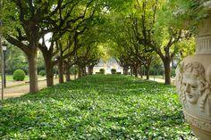 #Barcelona #park #walk #picnic #greenery #Bonavista #trees #palmtrees #benches #visits #ParcDePedralbes #Garden #Palau