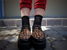 Leopard creepers.