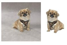 ZEBRA or LEOPARD PRINT SOFT PLUSH DOG HARNESS  Durable Reliable Walk SafetySmall Leopard Print >>> Click on the image for additional details.Note:It is affiliate link to Amazon.
