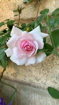 Field Wallpaper, Spring Wallpaper, Floral Wallpaper Iphone, Flower Wallpaper, Spring Aesthetic, Flower Aesthetic, Beautiful Rose Flowers, Giant Flowers, Rose Photos