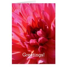Floral Greetings! Florist's Pink Dahlia Flower Card from Black Shed by Paul Stickland