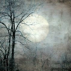 Sister Moon by Diane Paquin