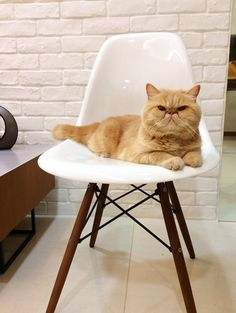 Boden, looking quite smart.....Monday's pets onfurniture - desire to inspire - desiretoinspire.net