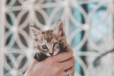 New Travel, Travel Goals, Snowshoe Cat, Like Instagram, In 2019, Animals And Pets, Traveling By Yourself, Kittens, Places