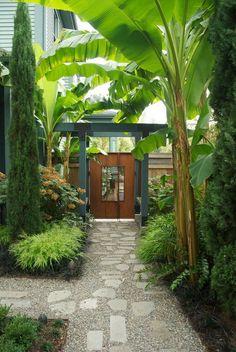 Use of banana trees as part of garden... Interesting. I like it!!