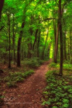 Forest by rafalzalewski #nature #mothernature #travel #traveling #vacation #visiting #trip #holiday #tourism #tourist #photooftheday #amazing #picoftheday
