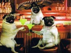 Margarita pugs