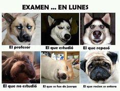 Whatveo: Memes con mascotas